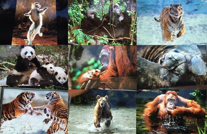 La fauna animal en las Organizaciones
