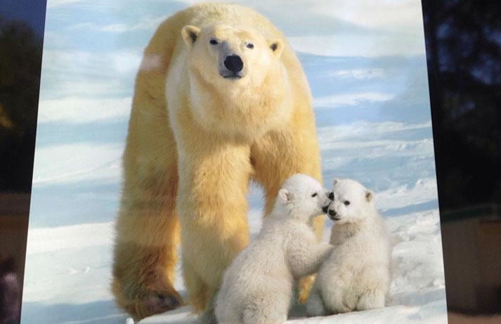 La fauna animal en las organizaciones. HuDiPro.